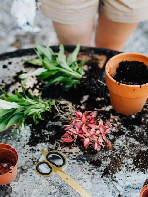 Kompostovanie a hnojenie