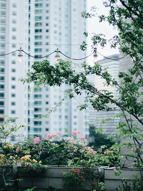Kríky a stromy na streche