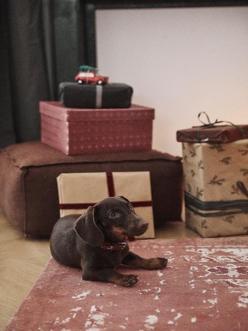 darčeky a pes