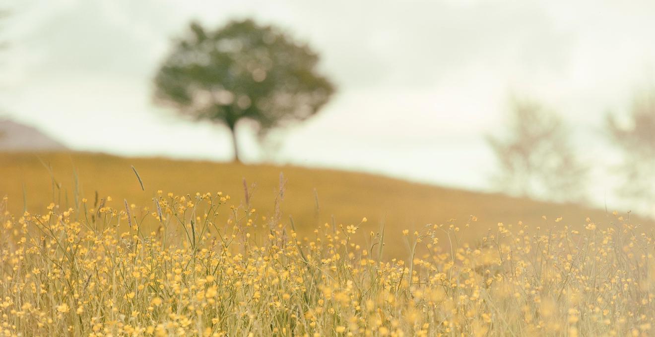 Láminas de paisajes