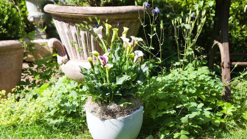 Jardines en terrazas, decoración fácil con plantas
