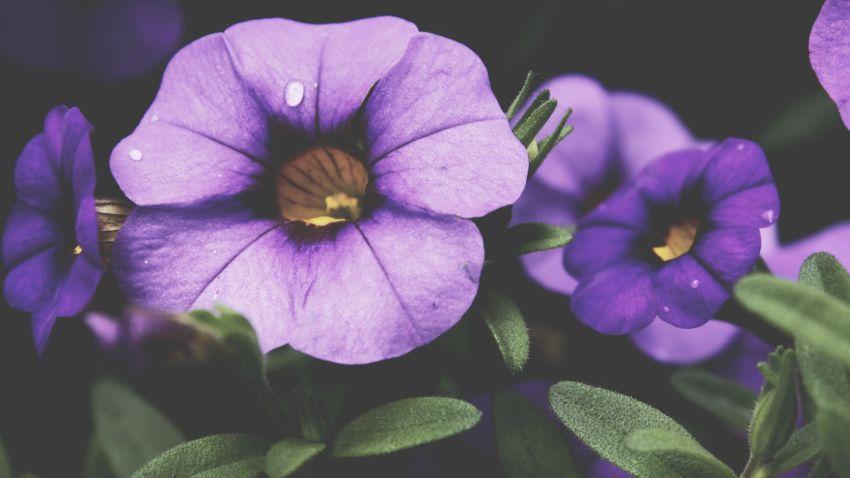Altar de flores