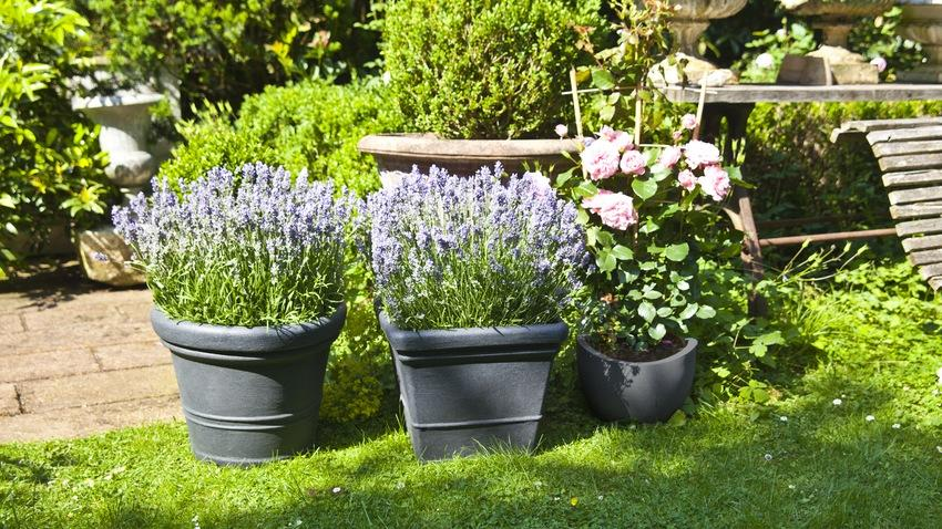 vasi da giardino fiori vasi da esterno