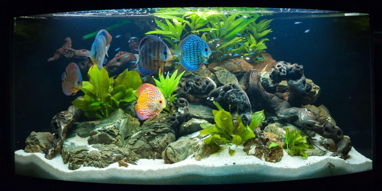 Aquarium decoratie