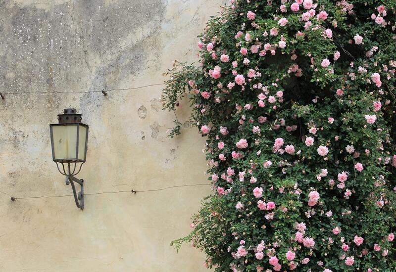 Antieke wandlamp tegen muur met bloemen