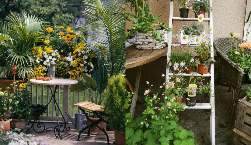Ogród na balkonie obsypany kwiatami
