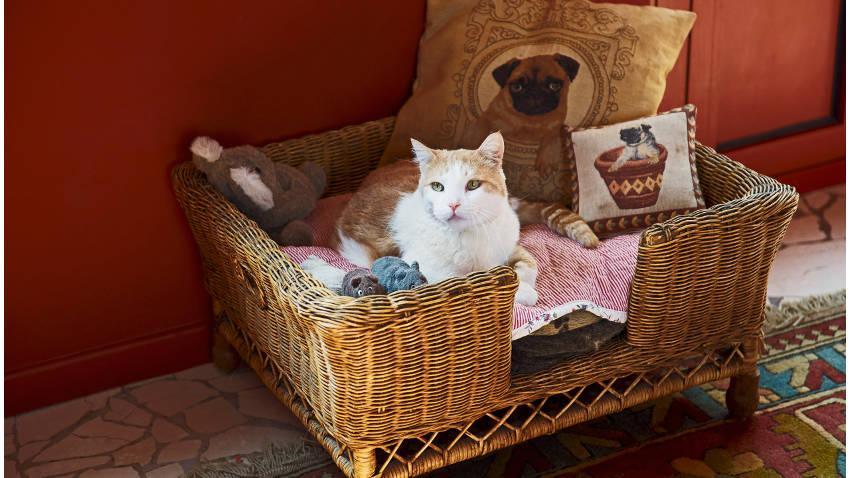 Koszyk dla kota