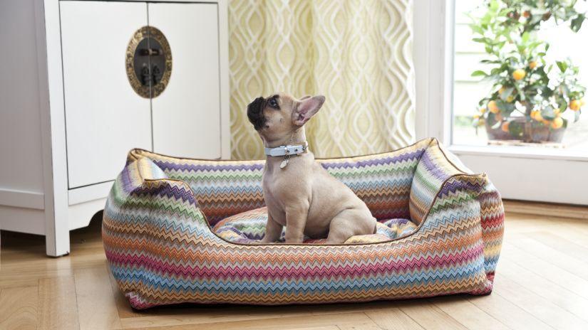 Veľký farebný vankúš pre psa