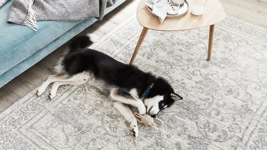 Kusový koberec - pet friendly