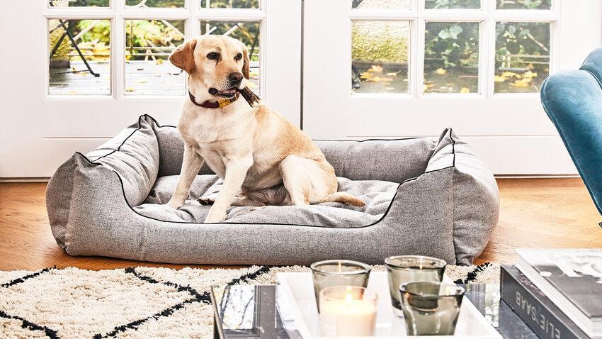 vankúš pre psa v obývačke