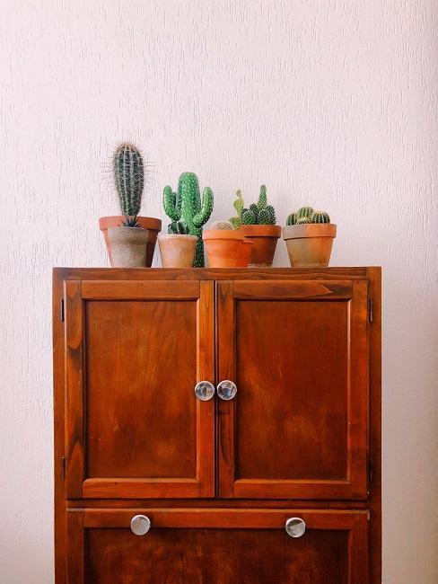 Pflegeleichte Zimmerpflanzen Kakteen in Töpfen auf Kommode aus Holz