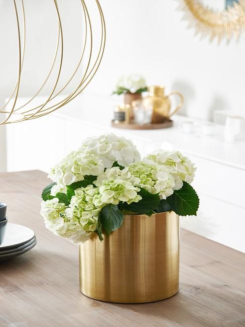 Weiße Hortensien in goldener Vase auf Esstisch