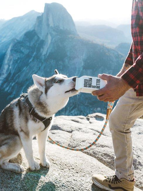 Hond boven op berg met baasje drinkt uit een pak
