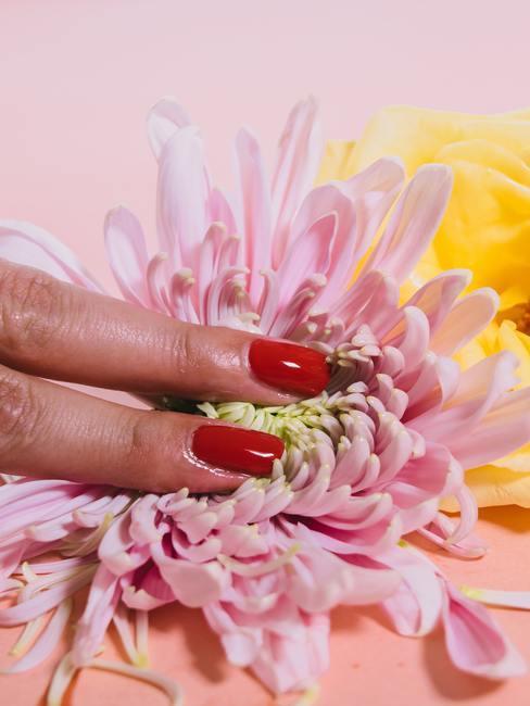 Twee vingers met rode nagellak in roze bloem