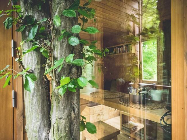 Zbliżenie na drzewo przylegające do drewnianej fasady domku