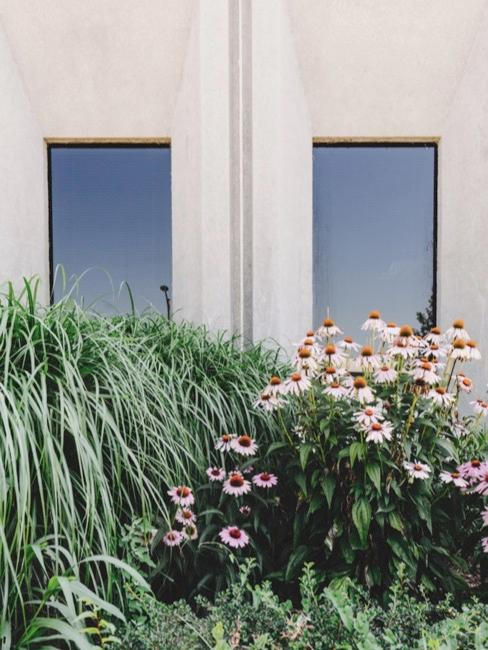 Vorgarten mit Blumen und zwei Fenstern