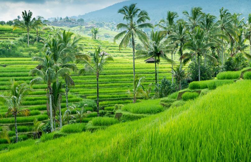 Bali, paraíso en la tierra