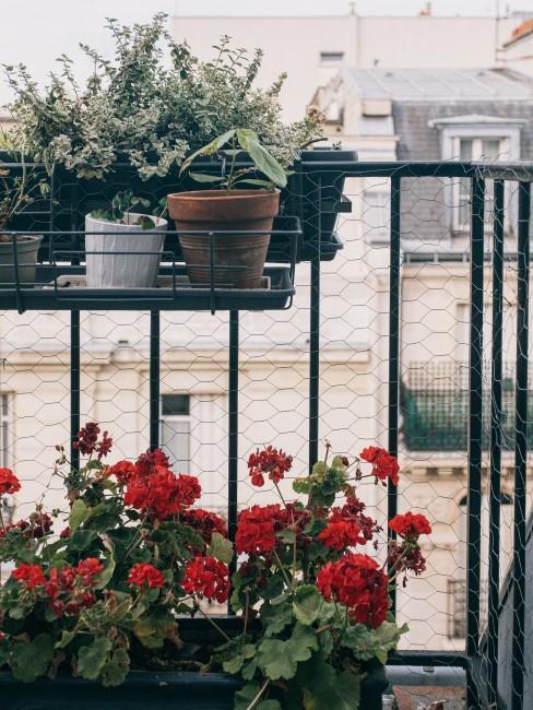 flores decorando un balcón