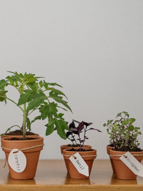 plantas de cocina