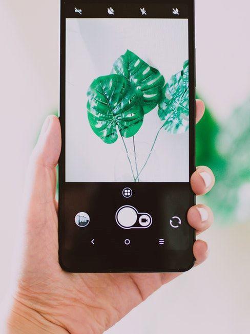Un smartphone dans la main d'une femme en train de prendre une photo d'une belle plante verte