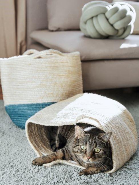 pulizie di casa gatto in una cesta