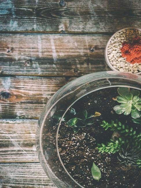 Kleines rundes Pflanzen Terrarium von oben auf einem Holztisch
