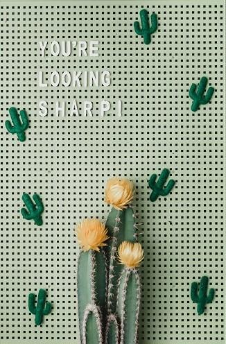 Deko Tafel mit Kakten und Schriftzug davor ein echter Kaktus