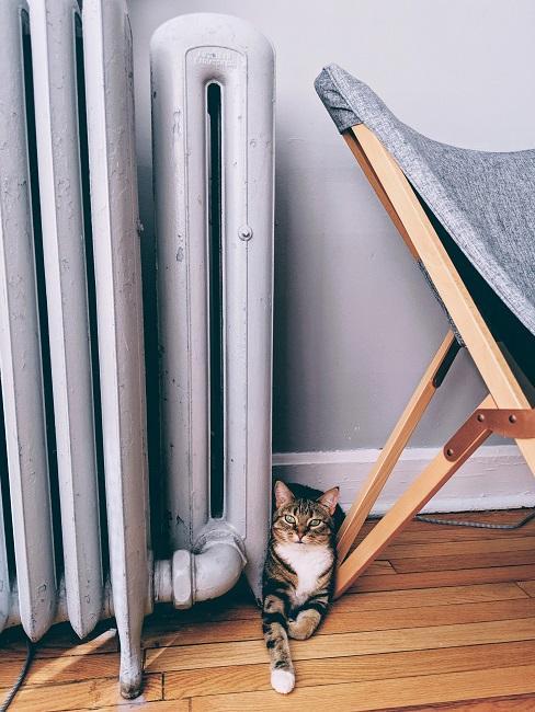 Heizkörper mit Katze daneben und einem Stuhl