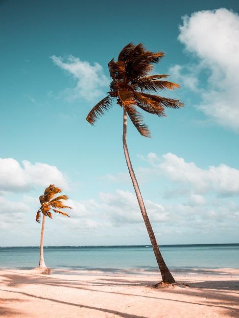 Zwei Palmen am Strand