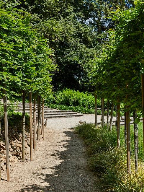 Moderner Garten Bäume Weg