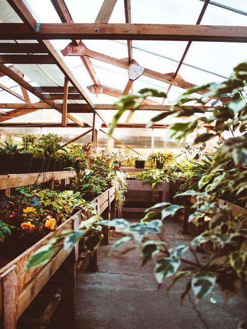 Invernadero con estructura de madera y cristal con plantas