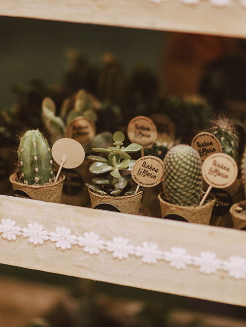 Pequeños cactus de regalo para invitados