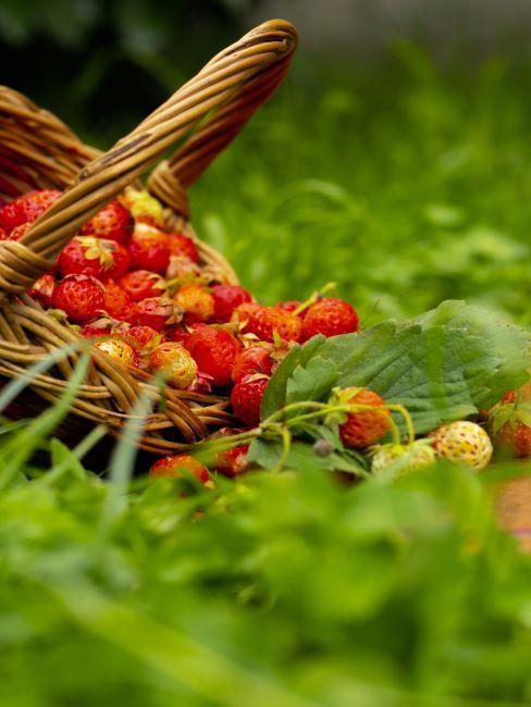 panier gourmand rempli des fraises