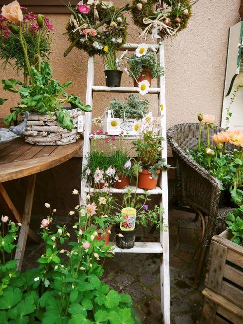 Echelle blanche appuyee contre un mur de balcon avec diverses plantes dans des pots