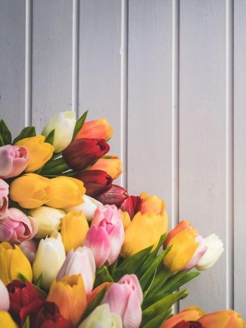 mazzo di tulipani colorati