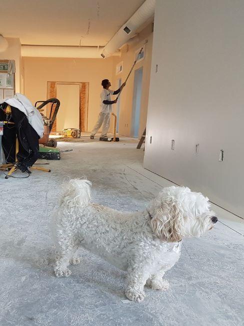 cane bianco in casa in ristrutturazione