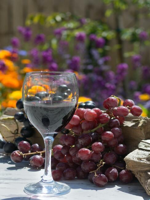 Rode wijn in glas naast de druiven