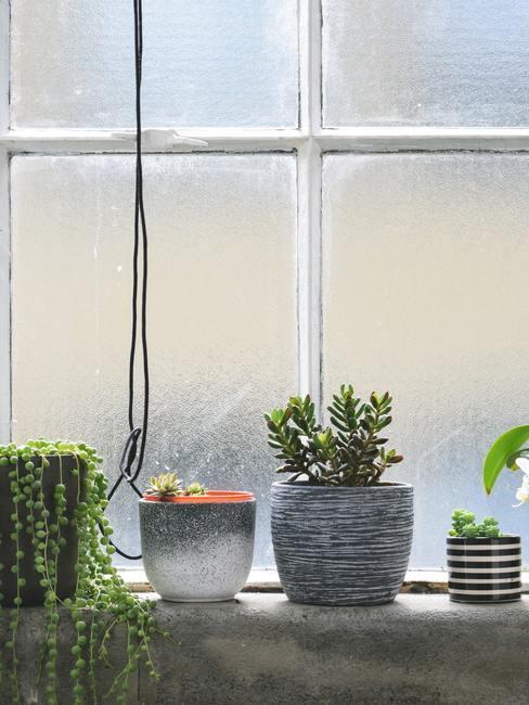 Raam met planten op
