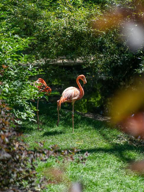 Roze flamingodecoratie in de tuin