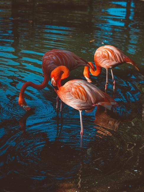 Roze flamingo's in de rivier
