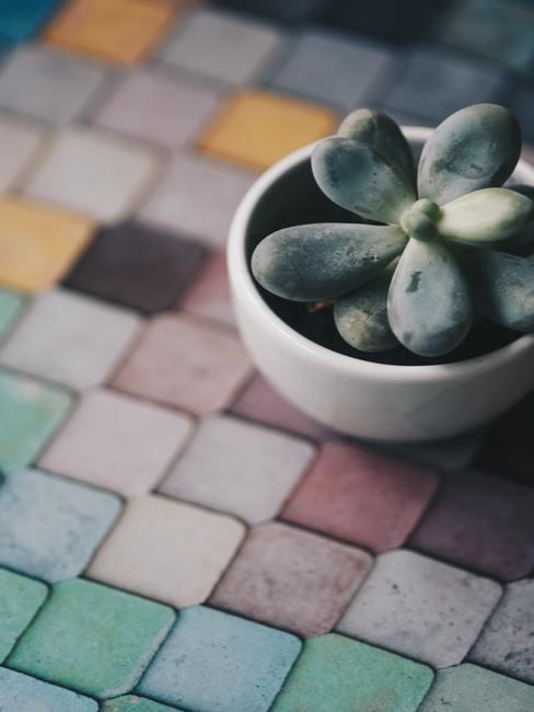 Tuintegels schoonmaken: goed onderhouden gekleurde tegels in de tuin