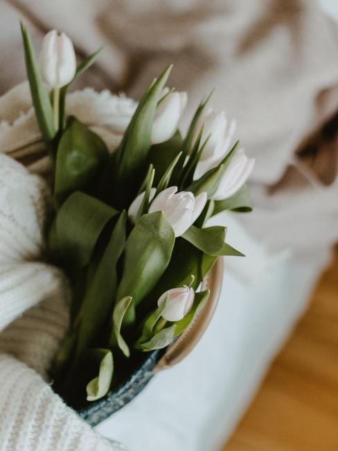 witte tulpen op een witte achtergrond