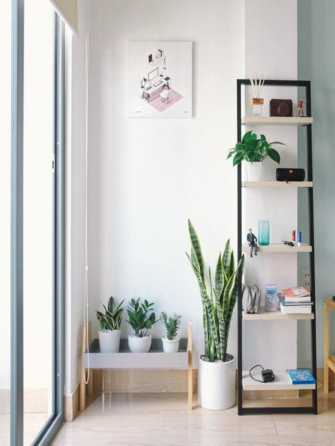 Veel feng shui planten in witte plantenpotten en accessoires op zwarte wandkast