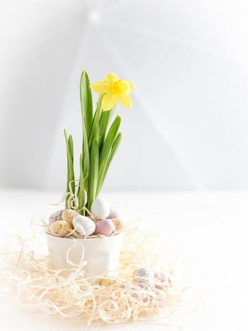 Stroik wielkanocny zrobiony z doniczką z żonkilem, małymi jajeczkami stojący na białym stole