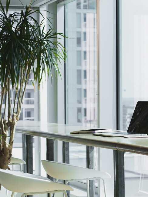Nowoczesne, przeszklone biuro z wysokiem biurkiem oraz krzesłami oraz palmą w doniczce