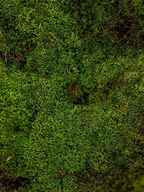 Deko Moos für ihr grünes Zuhause