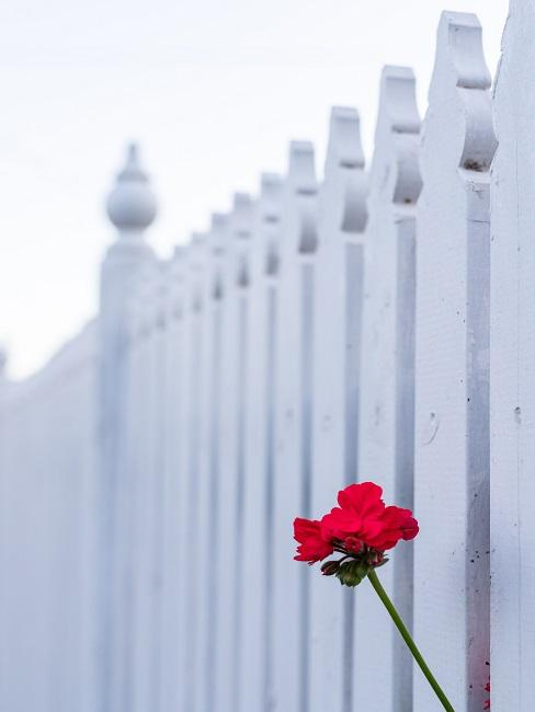 Sichtschutz Garten Zaun Weiß Blume