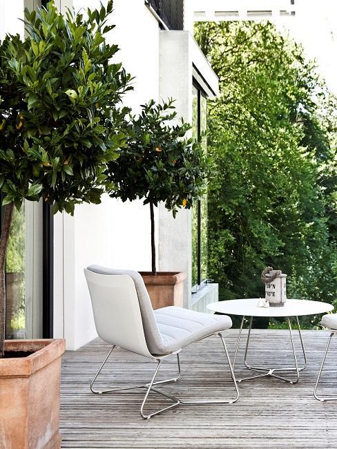 Moderne tuin met houten vlonder en twee olijfbomen in pot met witte loungstoelen