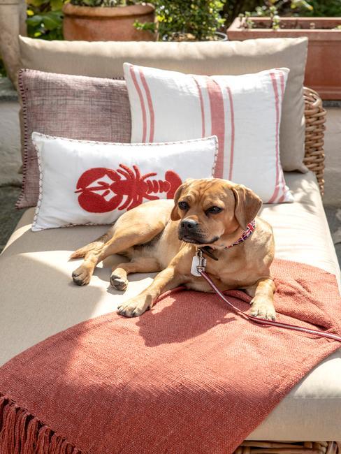Pies leżący na leżance wykonanej z plecionki z poduszkami oraz narzutą