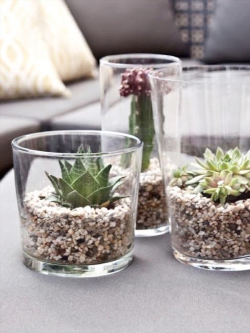 Vetplanten in glazen windlichten met steentjes